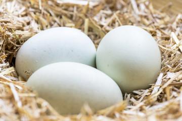 organic blue eggs
