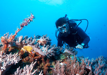 Scuba diver exploreds coral reef