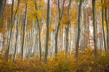Herbstwald mit buntem Laub