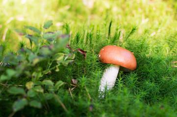 mushroom on green moss