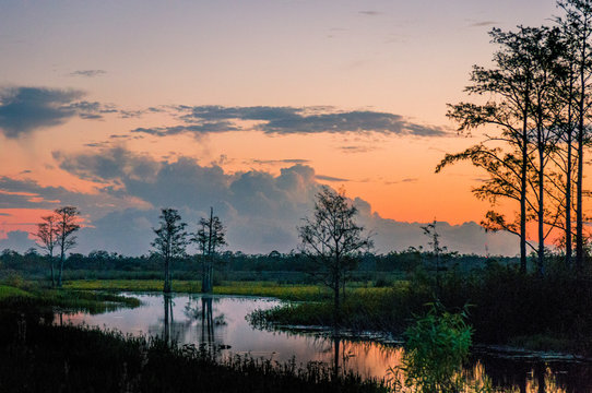 winding river in the swamp with orange and purple sunset and cypress tree silhouette