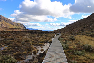 Hiking Path in Tongariro national park