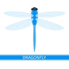 Vector illustration of dragonfly isolated on white background. Damselfly in flat style.
