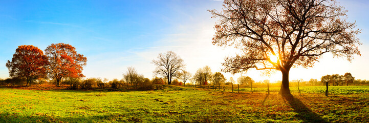 Panorama of a beautiful autumn landscape with meadows and trees at sunset