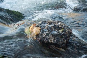 Türaufkleber Fluss détail rivière en automne