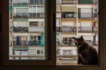 Cat sitting on window sill while watching in Barcelona, Catalonia, Spain.