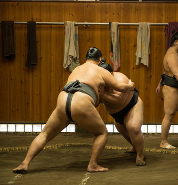 Enormous sumo fighters wresling and training in sumo stables in tokyo