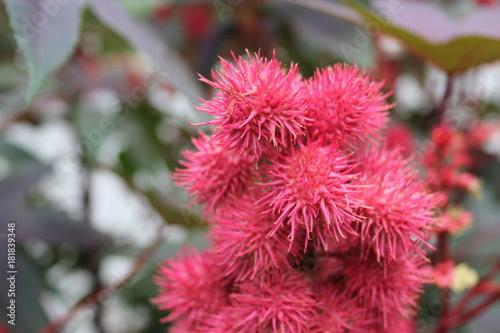 Spiky Bright Pink Flowers In Macro