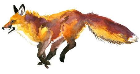 Watercolor Fox illustration.