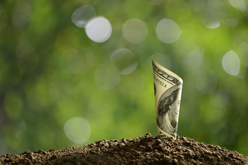 Image of rolled bank note on top of soil for business, saving, growth, economic concept