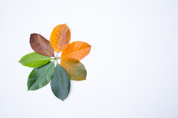 Wall Mural - Closeup leaves in different color. Line of colorful leaves shape of flower in autumn season. For environment changed concept. Top view flatlay background and banner.