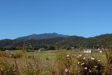 京都 嵯峨野の風景