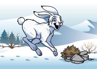 arctic hare in winter