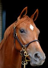 馬 サラブレッド