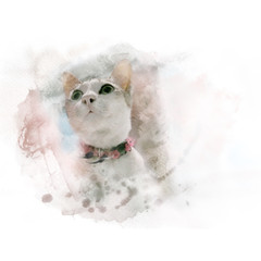 Cute white cat with old collar. Watercolor painting (retouch).