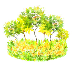 Watercolor painting. Group of green, yellow trees. Summer, autumn landscape Watercolor drawing, illustration. Vintage illustration on white isolated background. Postcard, card, tag, logo.