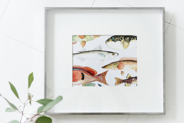 Photo frame of fishes