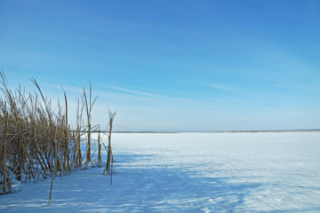 Winter landscape with frozen pond and dry reeds at the shore