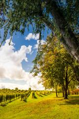 Vineyard sunrise bordeaux vineyard france aquitaine