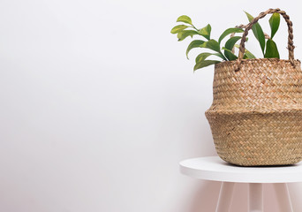 Straw flowerpot with green plant on the white wall background