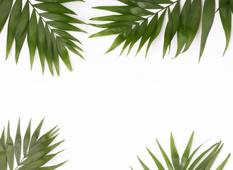 Green palm leaves on the white background