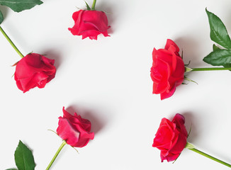 Red roses on the white background, top view.