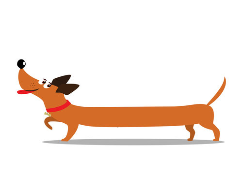 Cute cheerful long cartoon dachshund dog isolated on white background.