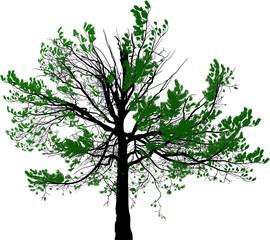 green pine large tree illustration