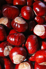 Chestnut background. Chestnuts as texture pattern cover wallpaper. Wild chestnuts whole brown autumn background- Autumn fall.