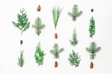 Christmas concept of winter trees on white background. Christmas or New year composition. Flat lay, top view