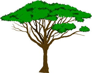 Vector Large african Acacia tree