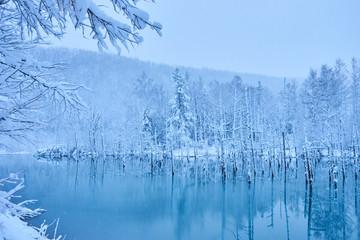 凍り始めた美瑛白金の青い池