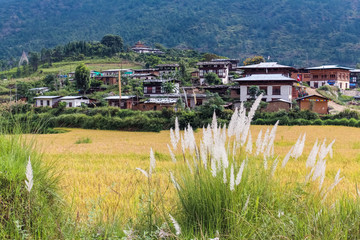 Traditional Bhutanese architecture in a rice field near Thimphu, Bhutan.