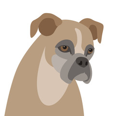 dog boxer head flat style vector illustration front