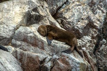 Paracas National Park in Peru