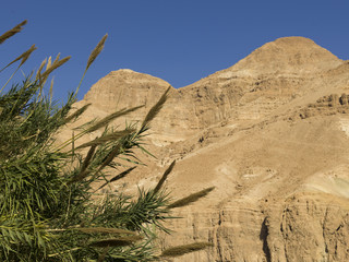 Plants growing on rock, En Gedi Nature Reserve, Judean Desert, Dead Sea Region, Israel
