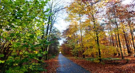 Beauty of Autumn :)