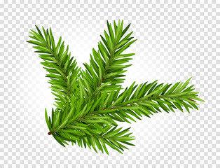 Green lush spruce or pine branch. Fir tree branch isolated on white vector christmas element