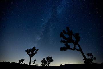Perseid Meteor Shower in Joshua Tree National Park