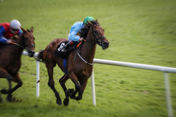 Lead race horse galloping on the track