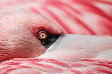 Foto auf Acrylglas Flamingo Flamingo