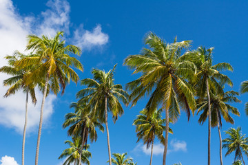 Background of tropical beach coconut palm trees blue sky