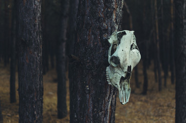 The horse skull hanging on a tree in a forest