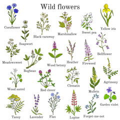Wild flowers color set