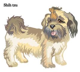 Shih tzu vector illustration
