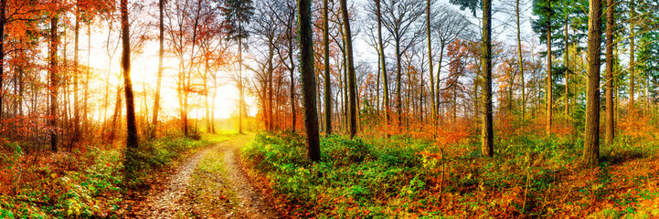 Wall Mural - Road through a beautiful autumn forest at sunrise