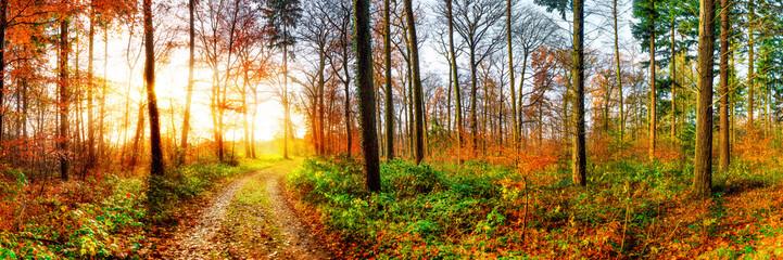Fototapete - Road through a beautiful autumn forest at sunrise