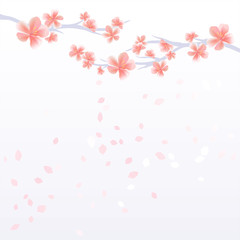 Branches of Sakura with Pink flowers and flying petals isolated on light Violet gradient background. Apple-tree flowers. Cherry blossom. Vector