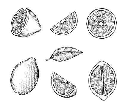 Hand drawn lemons with branch, lemon blossom, citrus slices and leaves. Citrus organic slice illustration on white background. For your web design.