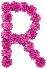 Letter R, alphabet from flowers of chrysanthemum, isolated on white background